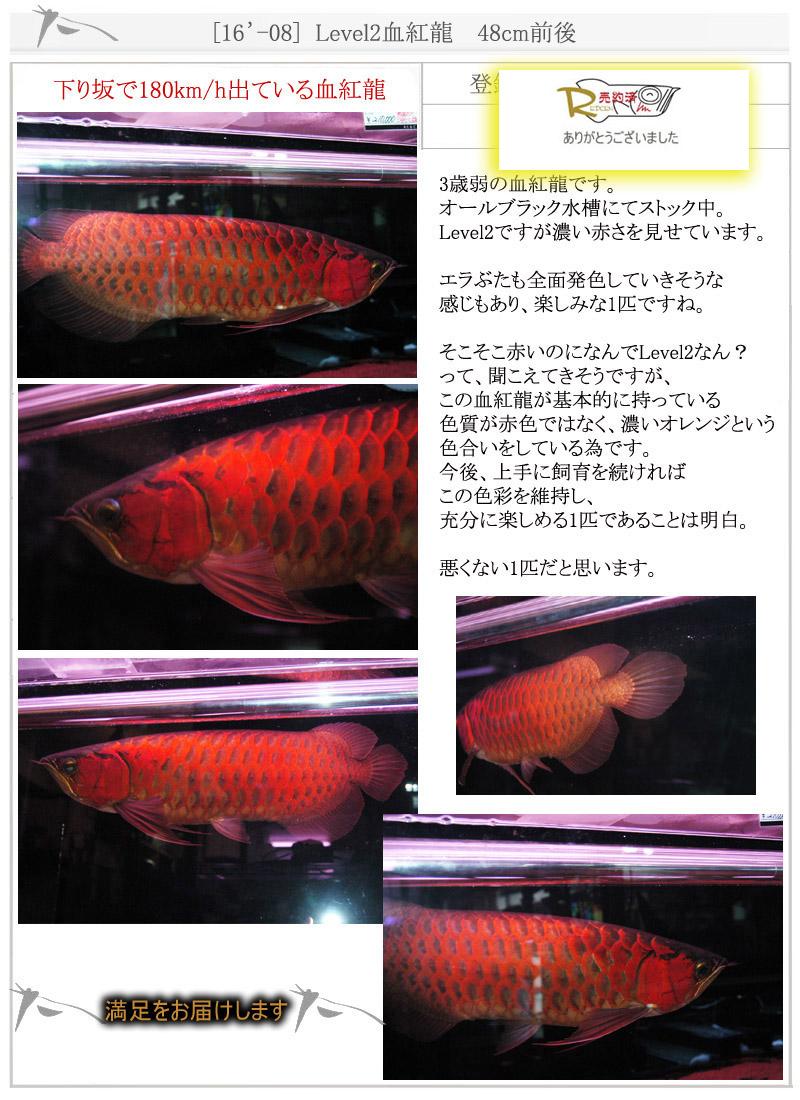 [16'-08] Level2血紅龍