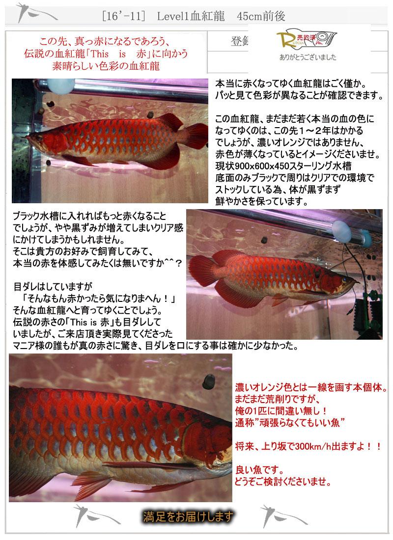[16'-11] Level1血紅龍