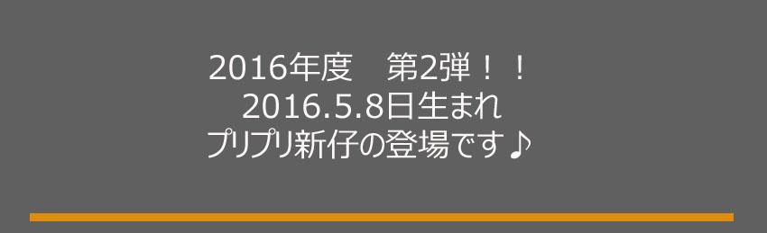 2016.5.8生まれ案内