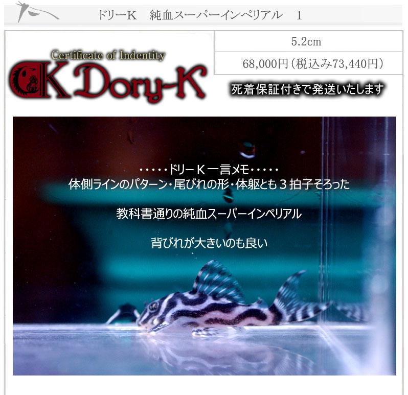 ドリーK純血インペリアル1
