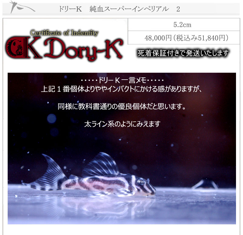 ドリーK純血インペリアル2