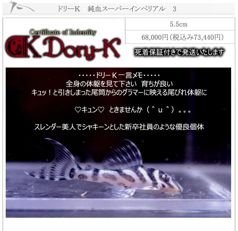 ドリーK純血インペリアル3