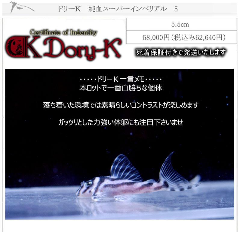 ドリーK純血インペリアル5