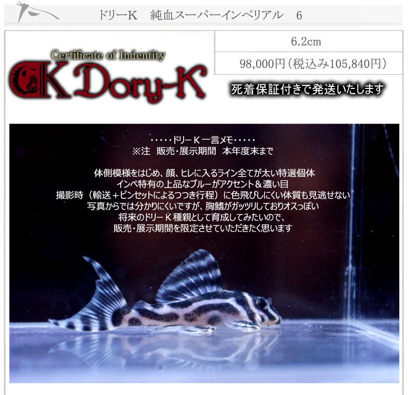ドリーK純血インペリアル6