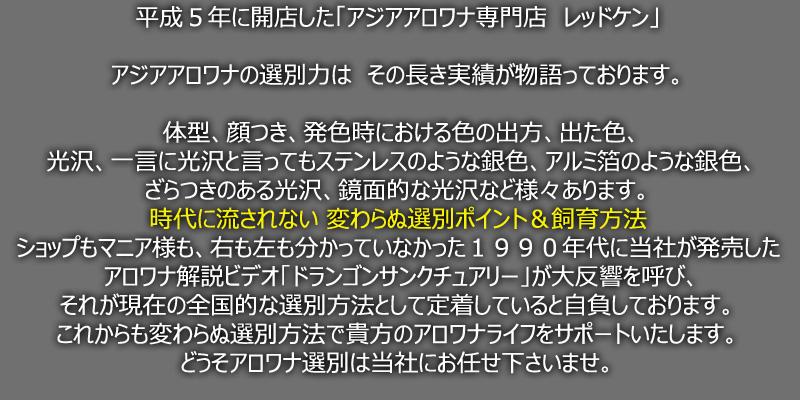 平成5年開店 アジアアロワナ専門店 レッドケン