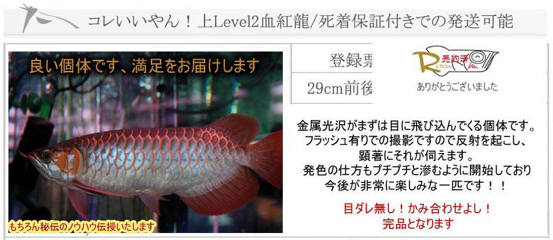 コレいいやん!Level2血紅龍