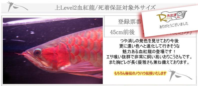 Level2血紅龍1127