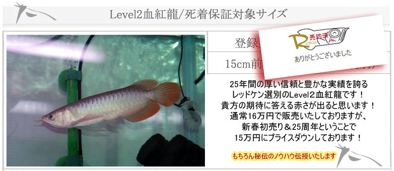 Level2血紅龍8630