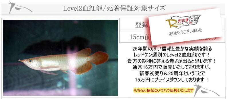 Level2血紅龍8623