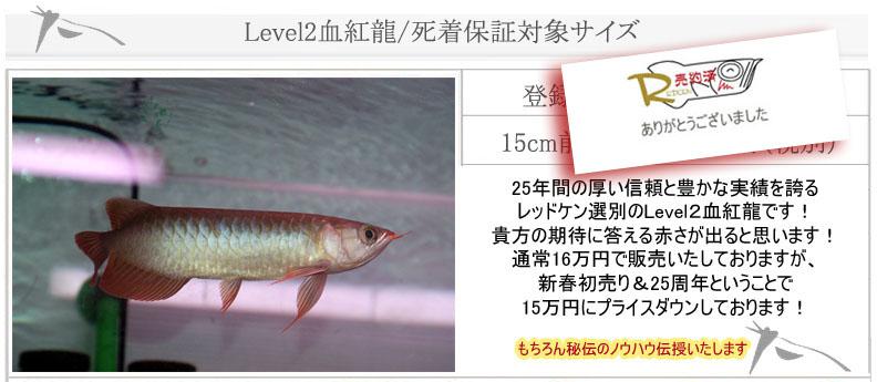 Level2血紅龍8621