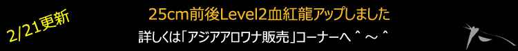 Level2血紅龍665