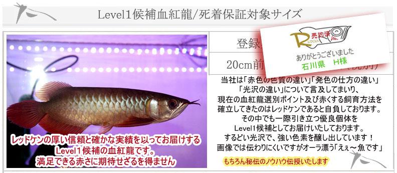 Level1候補血紅龍