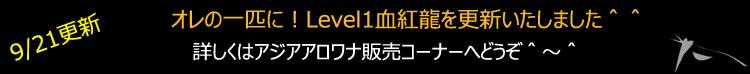 40cmLevel1血紅龍
