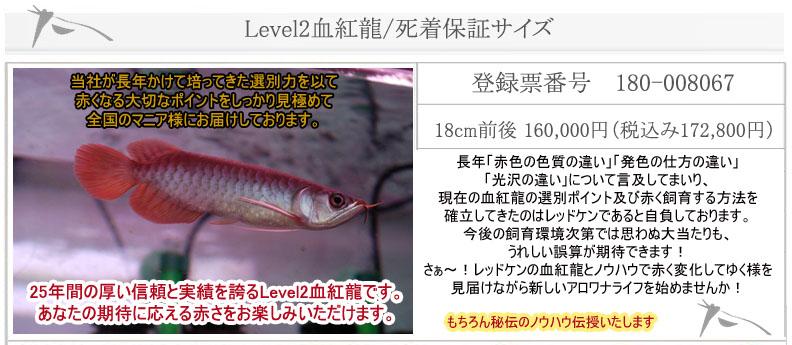 Level2血紅龍