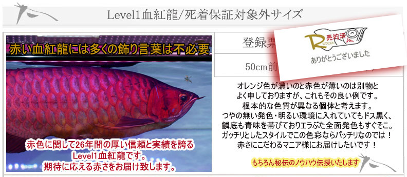 Level1血紅龍